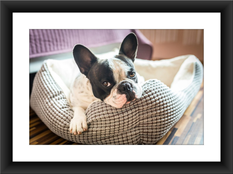 Frame your photos with a solid frame - Picture Fame App